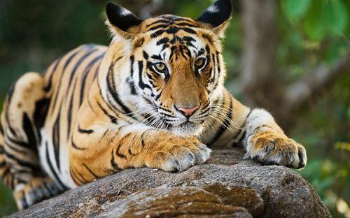 tiger den resort sawai madhopur